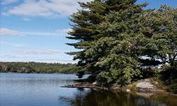 turtle-lake